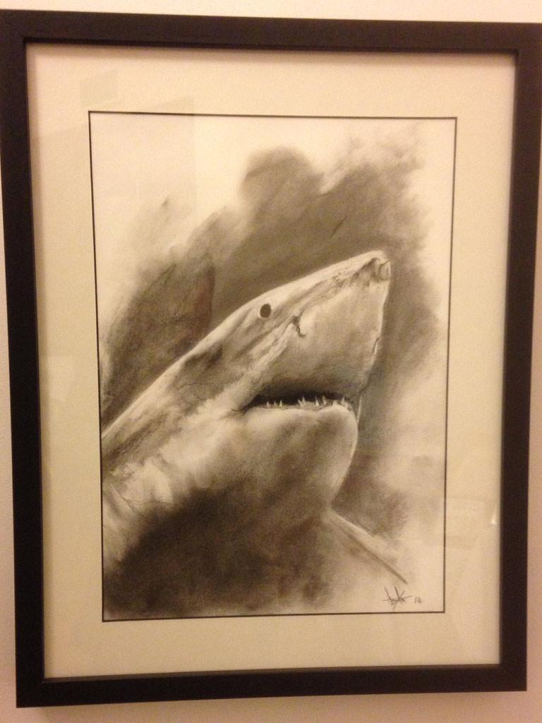 shark-photo